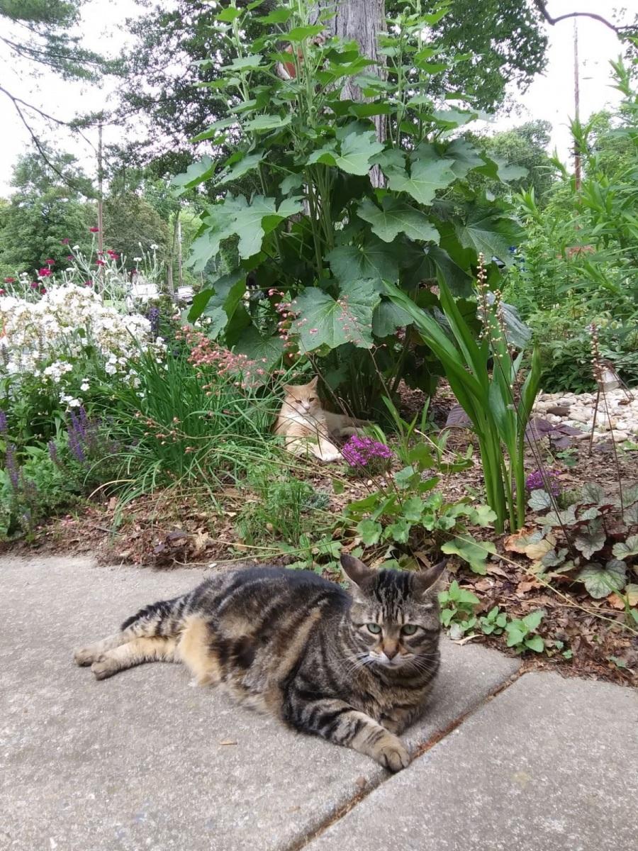 garden-guardians-front-garden