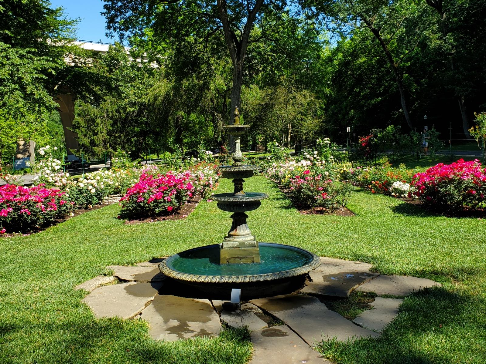 Public-Garden-Jasper-Crane-Rose-Garden-10