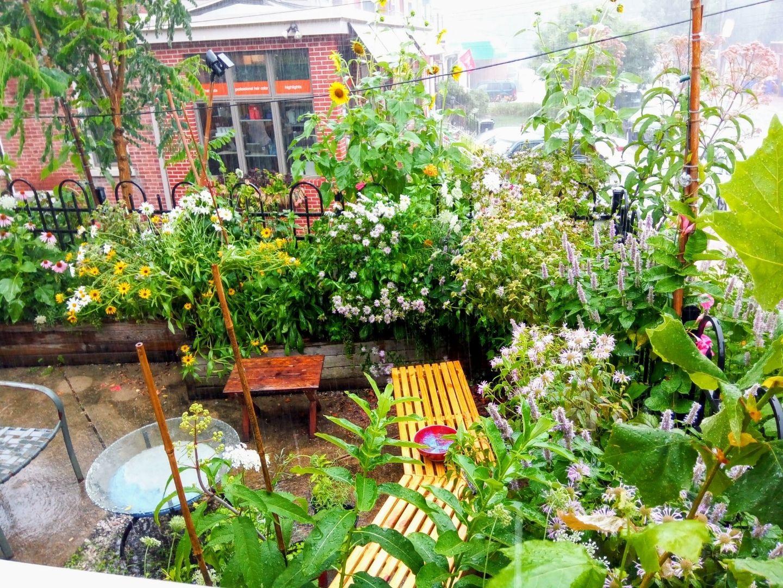 Clay's Small Wonder Urban Garden 2020