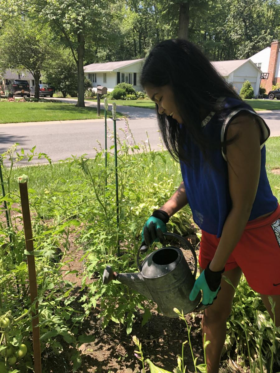 The-Gardener-Jasmine