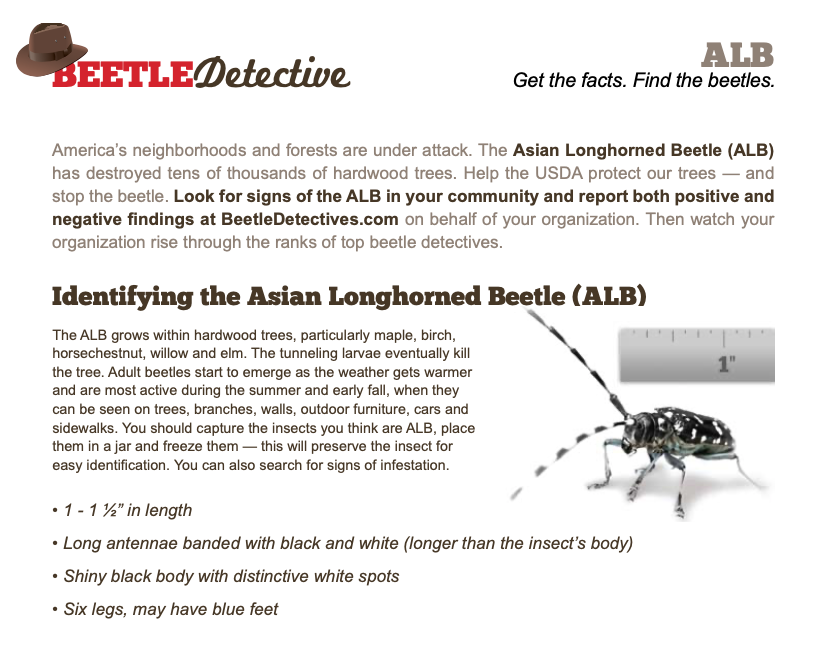 ALB Beetle Detectives Fact Sheet