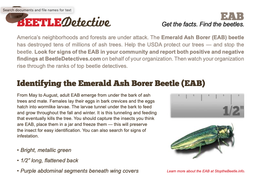 Emerald Ash Borer Beetle Fact Sheet