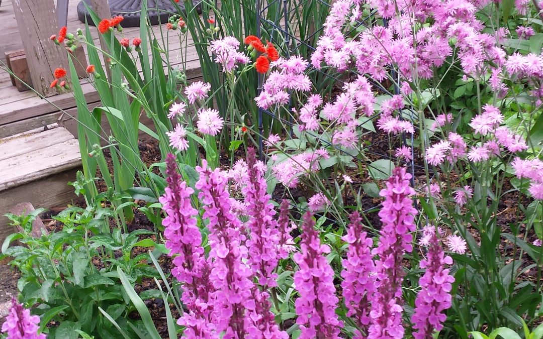 """Flowers Galore!"" by Christine Pochomis"